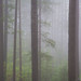 Forest in the Clouds  -  Humboldt County, California (2018) by David L. Hoffman