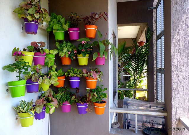 colorful balcony garden