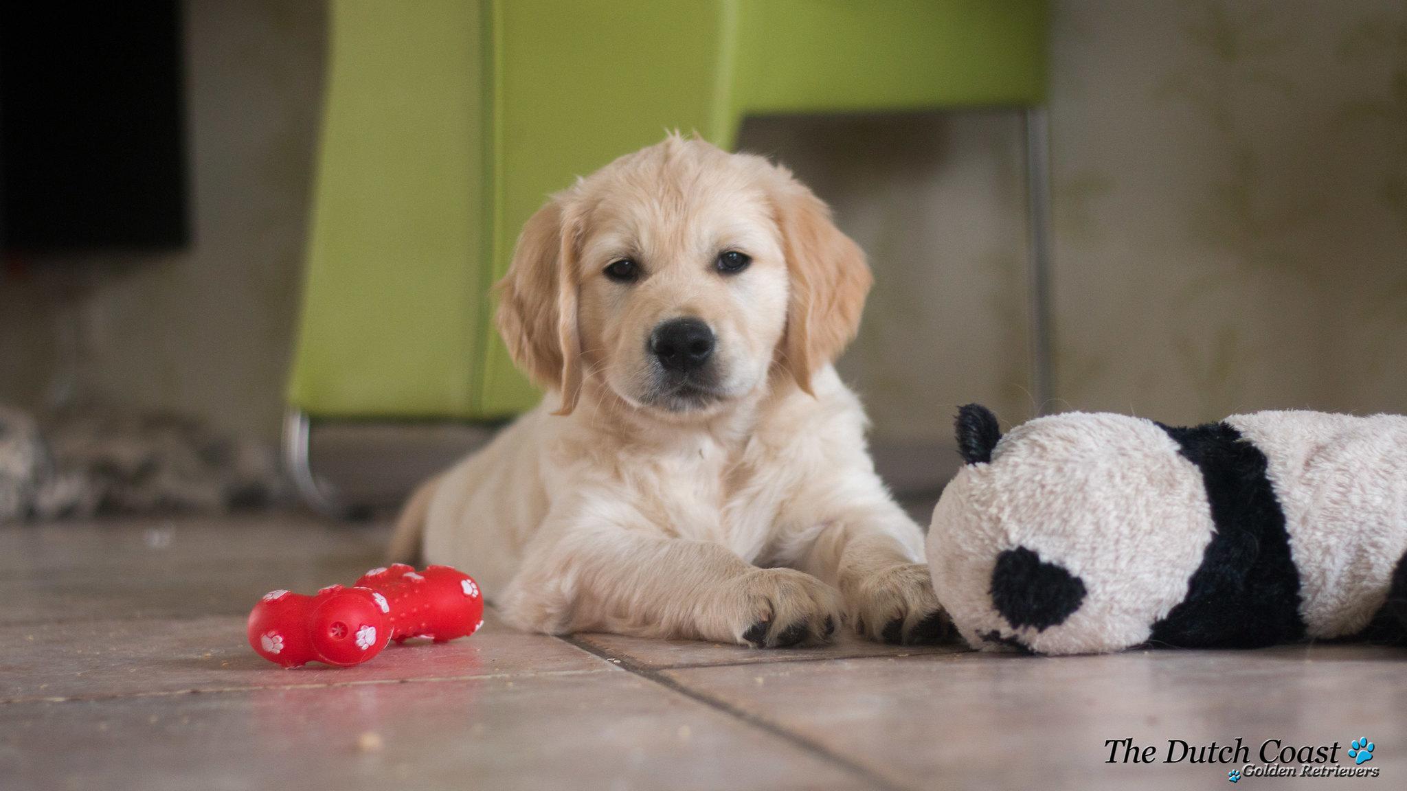 Puppy met panda
