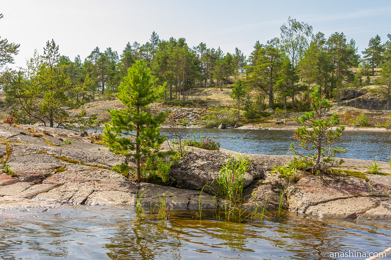 Сосны на скале, остров Хонкасало, Ладожское озеро