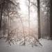 Winterschlaf by ArztG.|Photo