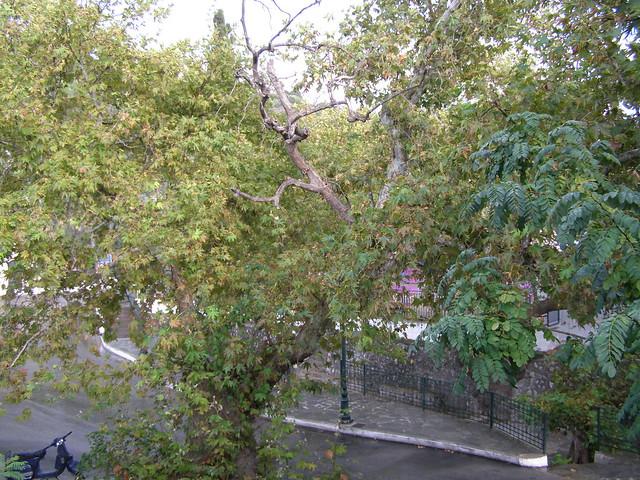 Οι πρώτες μέρες του φετινού φθινοπώρου στην Ψίνθο (2018)