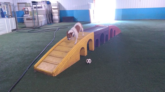 08_24_18 Soccer Play :-)