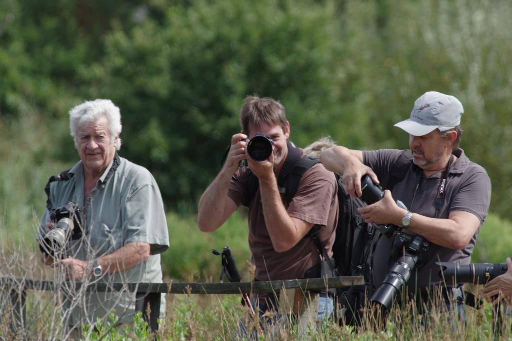 Sortie à la réserve ornithologique du Teich - 24 août 2018 43540332554_83c93cab4c_o