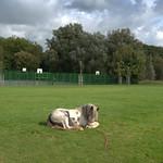 Moor Park scene at Preston