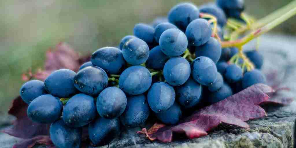 Des chimistes ont trouvé une façon d'utiliser les restes de raisins