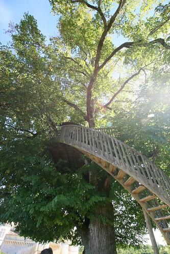 Vieux chêne dans les jardins du château de Bannes et son escalier