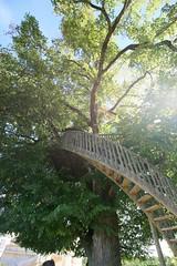 Vieux chêne dans les jardins du château de Bannes et son escalier - Photo of Labouquerie