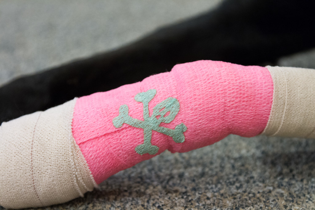 A close-up view of our dog Ellie's pink bandage with a skull-and-crossbones on it