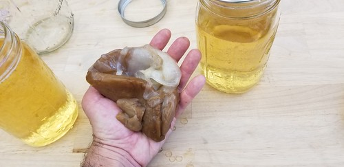 SCOBY of Least Resistance
