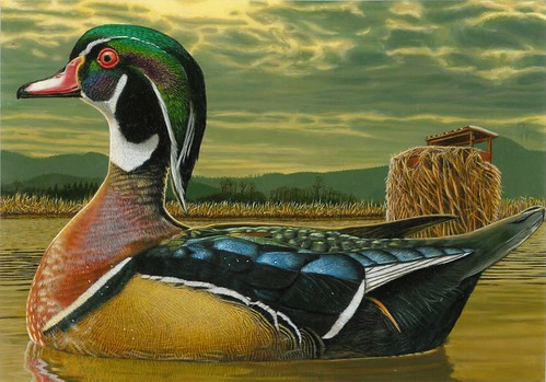 2018 Federal Duck Stamp Contest Entry 089