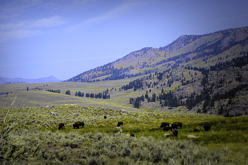 Bison View-1-Edit
