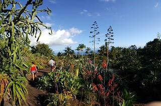 Jardin Botanique Des Mascarins
