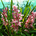 Pink Orchids by Chrissie2003