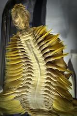 Giant Antarctic Scale Worm (Eulagisca Gigantea)
