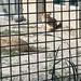 Newquay Zoo 4/9/18