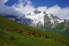 Tour du Mont Blanc / Trek