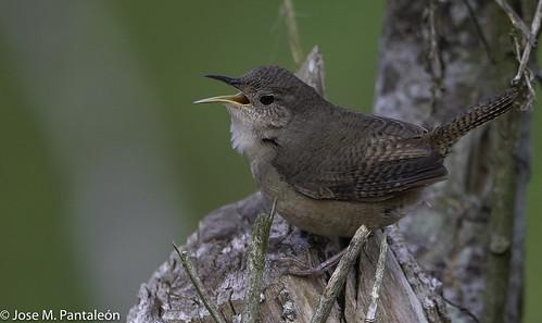 1-Cante, que para cantar no hacen falta las alhajas. Cualquiera canta con solo usar la garganta y echar el alma a volar.(Roy Brown)
