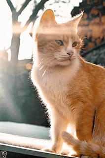 Bežo 18 | Cats Edition 10