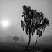 Im Nebel 01 sw
