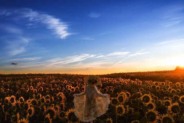 daybreaks sunflower, Sony DSC-RX1R, 35mm F2.0
