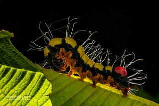 Caterpillar - DSC_1142