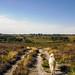 A walk on Canford Heath