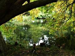 Syon Park Gardens Lake.