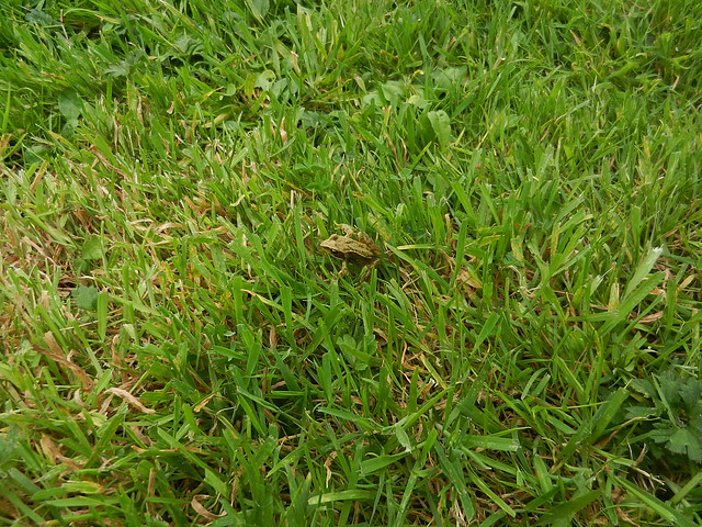 Baby Froglet