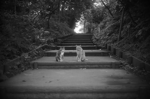 Cat in the gatekeeper