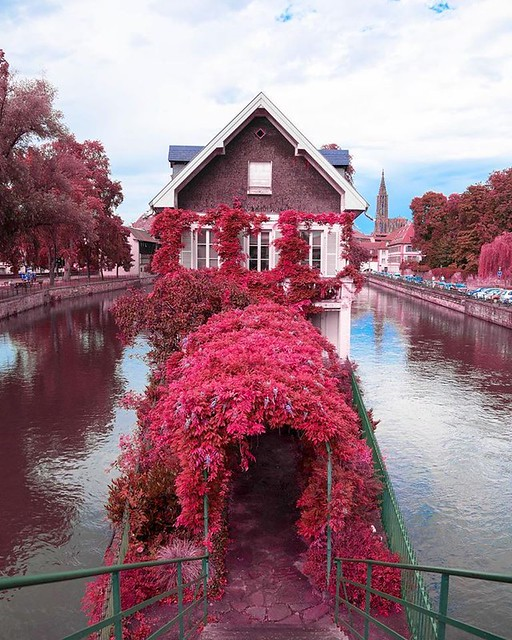 Summer fully in bloom 😍 - 🌍Strasbourg, France -  Saaggo's photography