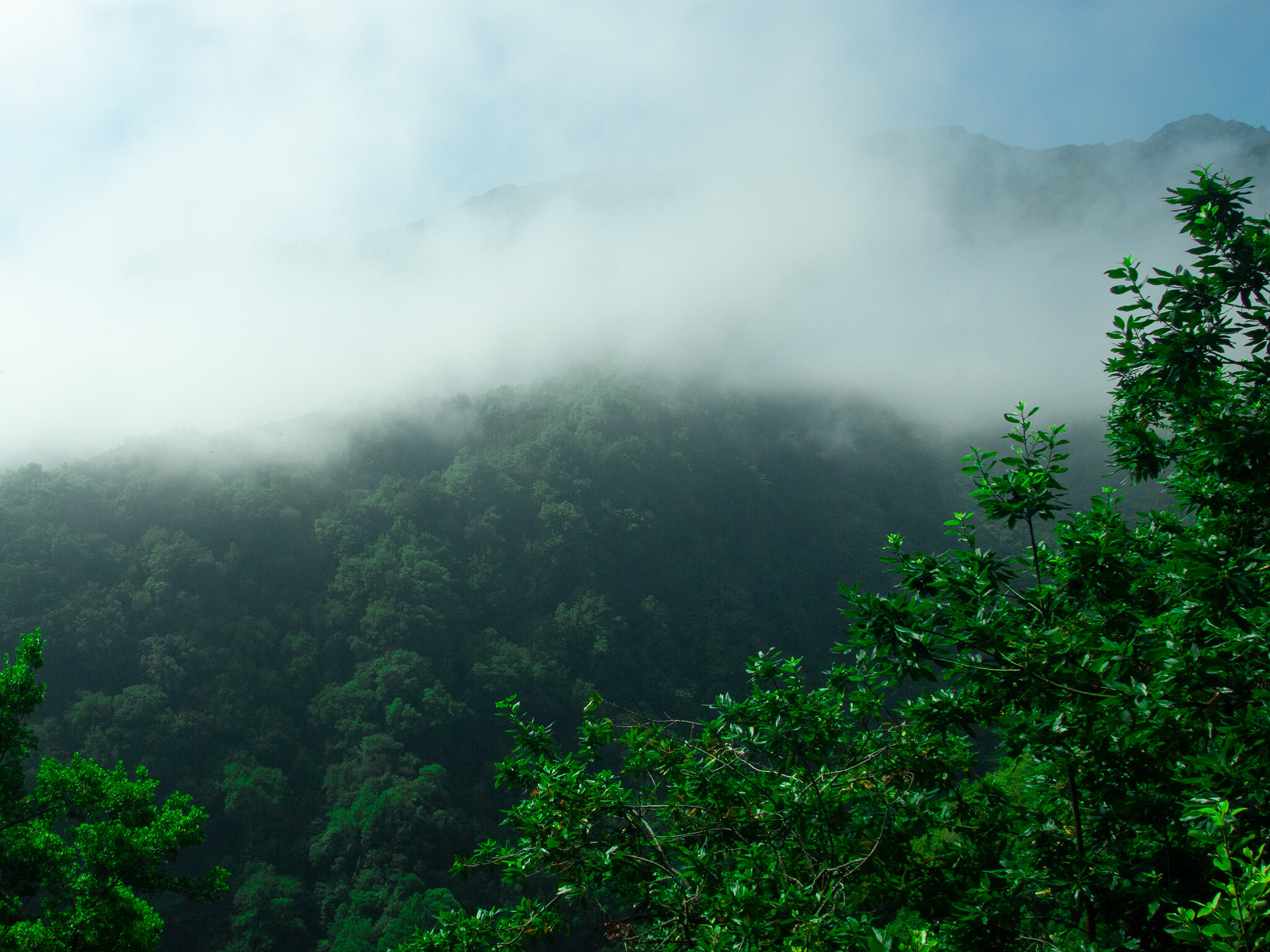King's Levada Madeira