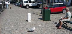 Sea Gulls at Veere (15)