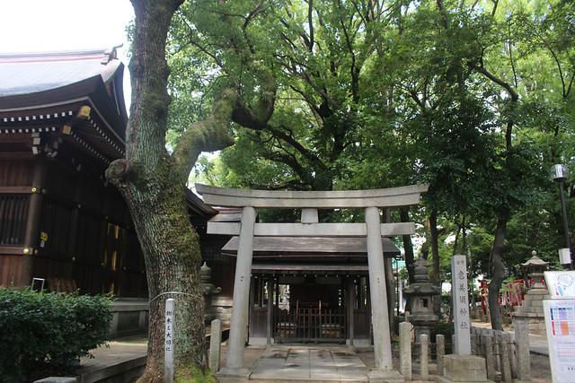 wakamiyahachiman014