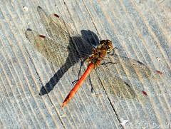 Insectes et petites bêtes 2