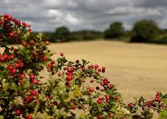 Hampshire Scenes