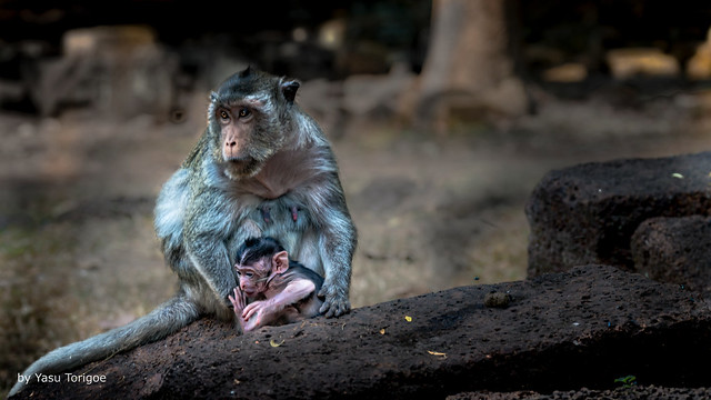 Infant with Mother at Wat Preah Ngok, Angkor, Cambodia-1a
