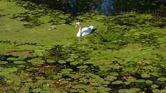 Sur la Saône