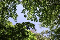 Särö Forest 5