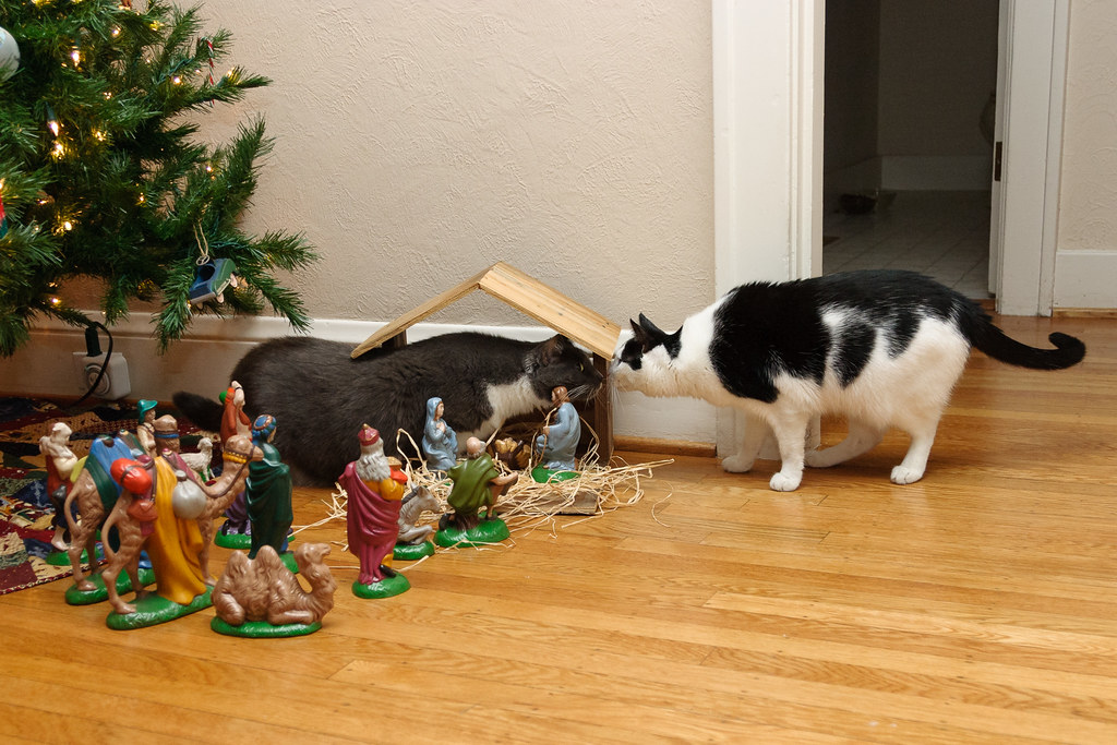Our cats Templeton and Scout greet one another in the nativity set in 2004
