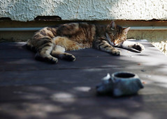 Raku-cat