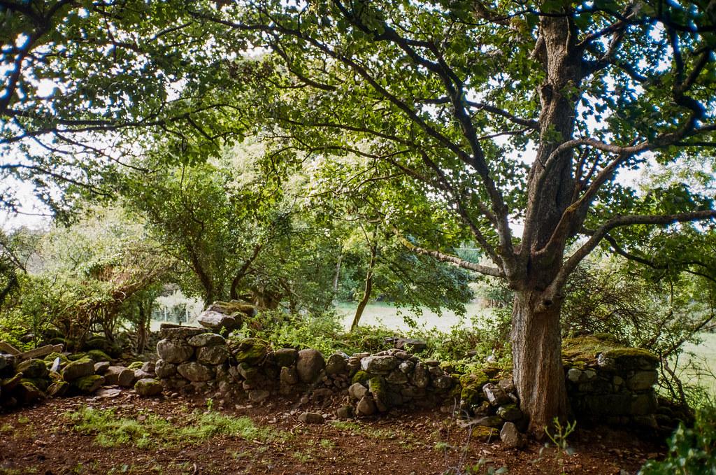 Wales trees Olympus mju ii