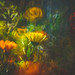 Back to Bokeh by Dhina A