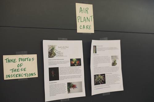 Greenhouse Plant Sale