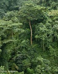 selva en Bioko