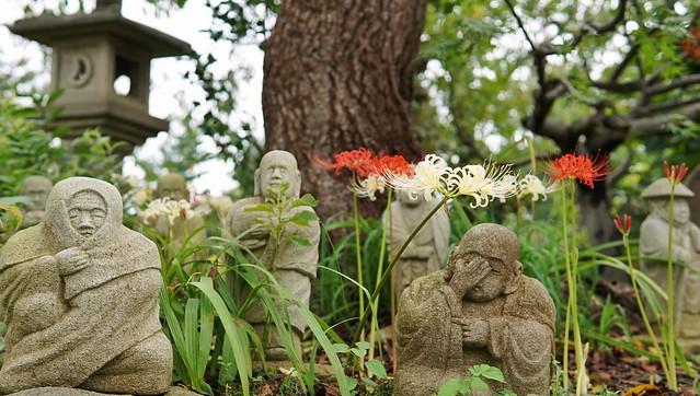 常泉寺(花寺)DSC00630-01