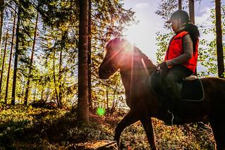 horse rider in a autum forest