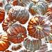 Pumpkin Time by VenusTraum