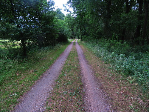 20180624 20 190 Baltica Wald Weg