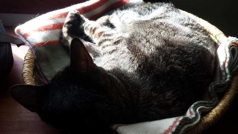 Sunbeam nap